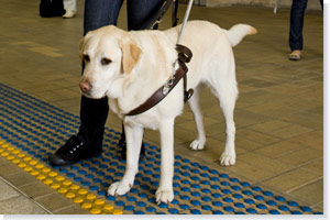 Guide dog at Central station